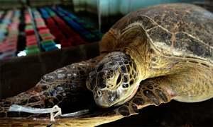 'Neglect killed ailing turtle'