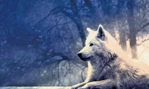 لفظ تماشا: روسیا کتے کا پلّا