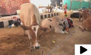 عیدالاضحی سے قبل کراچی میں جانوروں کی دیکھ بھال کی مشکل آسان