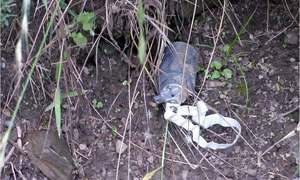 Political leadership condemns use of cluster bomb along LoC