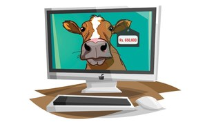 E-commerce sites bask in animal shopping boom