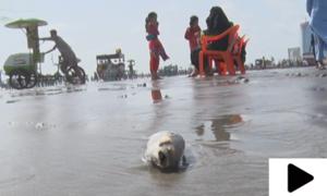 کراچی میں سیکڑوں مردہ مچھلیاں کلفٹن کے ساحل پر آگئیں
