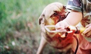 پاکستان سگ گزیدگی سے کس طرح پاک ہوسکتا ہے؟