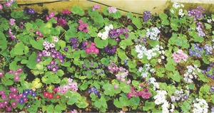 GARDENING: THE ROOT OF PROBLEMS