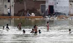 کراچی میں حالیہ بارش کے بعد مکھیوں کی پھر بھرمار