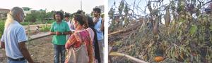 Plants in Urban Forest uprooted by KMC after cancelling its adoption