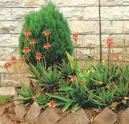 GARDENING: LANDSCAPING WITHOUT WATER