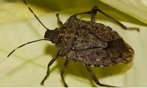 مکھیوں، مچھوں کے بعد کراچی پر نئے قسم کے 'حشرات الارض' کی بہتات