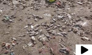سی ویو پر سینکڑوں مچھلیاں آبی آلودگی کی وجہ سے متاثر