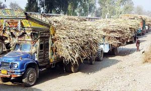 Sugar cane production in Sindh registers significant drop in 2018-19