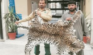 Software engineer held for selling leopard skin