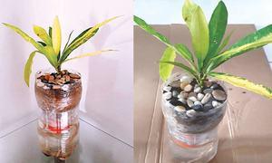 Wonder Craft: Self-watering planter