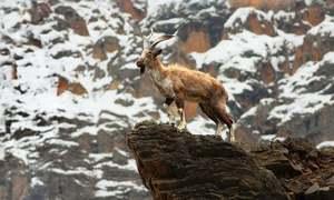 بقا کی جنگ لڑنے والی جنگلی حیات کا ریکارڈ مرتب کرنے کا آغاز