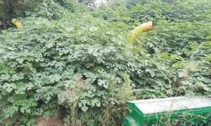 Agricultural implements continue to rust in Chakwal