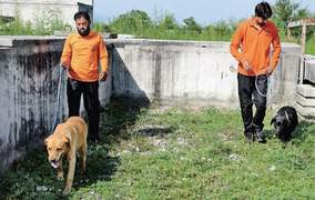 MCI loses another trained rescue dog