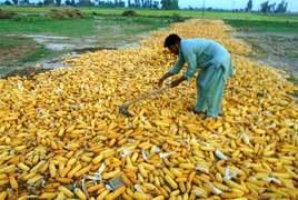 ADB $2.5m grant to improve farm sector productivity