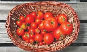 ٹماٹر دنیا کی سب سے مہنگی کرنسی؟
