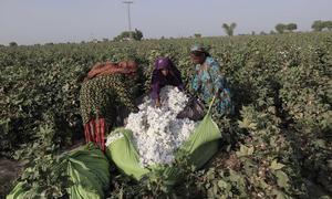 Cotton output falls by 1.8m bales