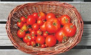 'لال، لال' ٹماٹر پر بات ہو رہی ہے