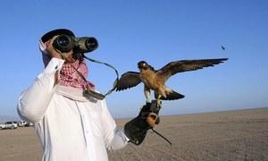 لائسنس کے بغیر تلور کا شکار کرنے کی کوشش پر 7 قطری شہری گرفتار
