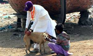 Sindh govt given last chance to approve plan to sterilise stray dogs