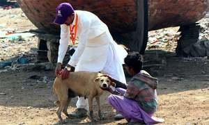 آوارہ کتوں کی ویکسینیشن: منصوبے کی منظوری کیلئے سندھ حکومت کو آخری مہلت