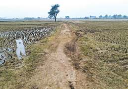 Late November rain disrupts wheat sowing in Sialkot