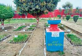 164,761 saplings planted in schools