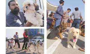 Canine-lovers flock to All Breed Dog Show