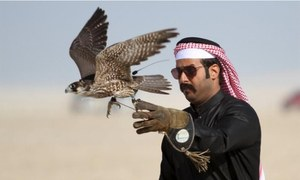 UAE royals allowed to hunt rare houbara bustard