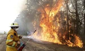 Burned tigers, rescued kangaroos: Australia bushfire disinformation