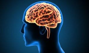 2 ہزار سال قدیم انسانی دماغ آج تک اصل حالت میں کیسے ہے؟