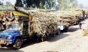 Sugar industry conundrum