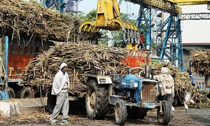 Malaysia to buy more Indian sugar to resolve palm oil spat