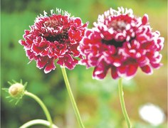 GARDENING: CELEBRATING PLANT HEALTH