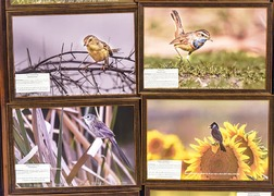 Refurbished wildlife museum offers enticing exhibits for nature lovers