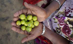 سہولیات کے بغیر کس طرح خواتین نے صحرا میں انقلاب برپا کیا؟
