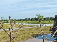 Chenab freshet ambushes wheat farms