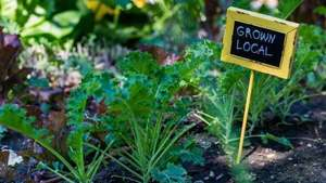 Urban gardening is the future of healthy living