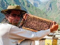 Climate change, deforestation, cripple Pakistan's honey exports