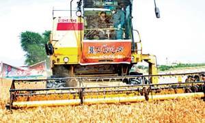 Buzdar opens wheat harvesting in Rajanpur