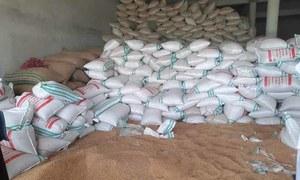سندھ: سرکاری گوداموں سے 5 ارب 35 کروڑ روپے کی گندم غائب ہونے کا انکشاف