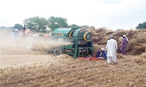 Dust produced by wheat threshing causing respiratory problem