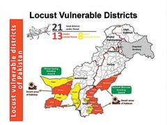 Locust attacks may cause food security crisis in Pakistan
