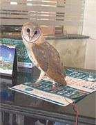 Birding enthusiasts rescue owl