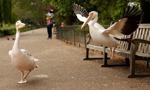 کورونا لاک ڈاؤن کے باعث چرند پرند نے عوامی مقامات پر ڈیرے ڈال لیے