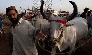 Clerics ask people to opt for collective sacrifice of animals