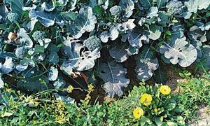GARDENING: GROWING FOR SURVIVAL