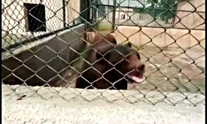 Concerns pour in after private zoo bear's video in Lahore goes viral