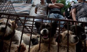 کمبوڈیا میں کتے کا گوشت کھانے اور بیچنے پر پابندی